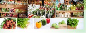 Cửa hàng thực phẩm Viet Green Foods